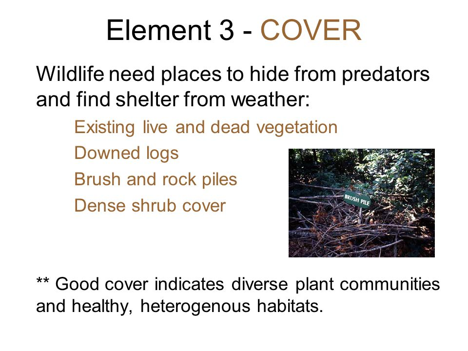 Wildlife need places to hide from predators and find shelter from weather: Existing live and dead vegetation Downed logs Brush and rock piles Dense sh
