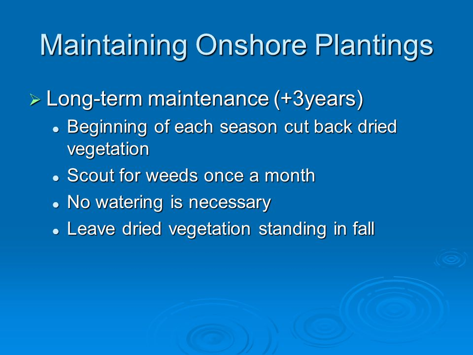 Maintaining Onshore Plantings  Long-term maintenance (+3years) Beginning of each season cut back dried vegetation Beginning of each season cut back dried vegetation Scout for weeds once a month Scout for weeds once a month No watering is necessary No watering is necessary Leave dried vegetation standing in fall Leave dried vegetation standing in fall
