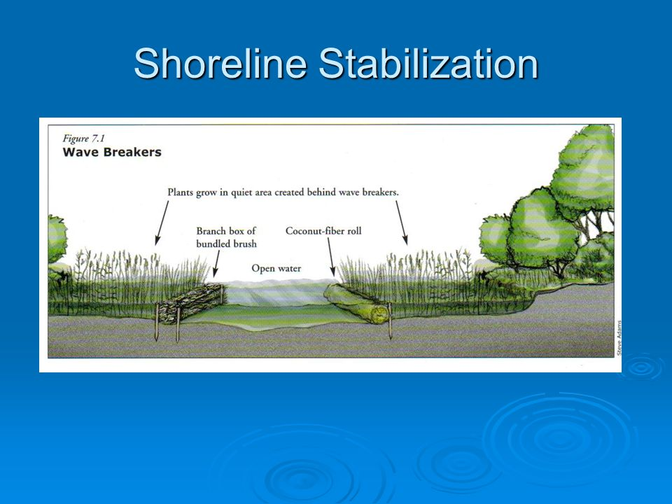 Shoreline Stabilization  Bioengineering Stabilizes bank Stabilizes bank Uses living materials Uses living materials Creates habitatCreates habitat Self repairingSelf repairing cheaper cheaper