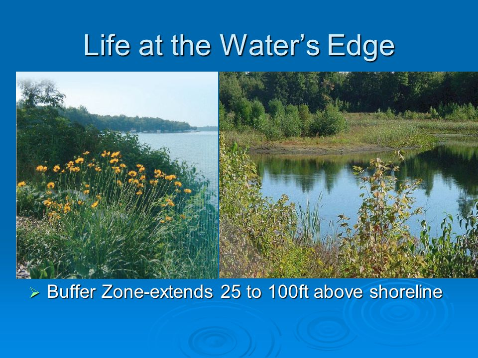 Life at the Water's Edge  Buffer Zone-extends 25 to 100ft above shoreline