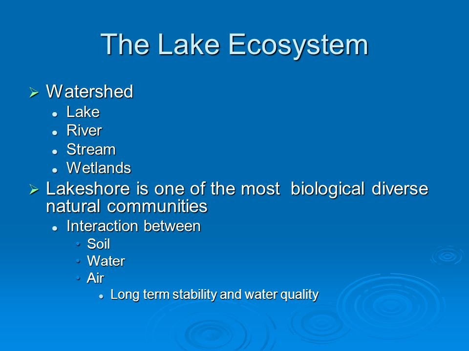 The Lake Ecosystem  Watershed Lake Lake River River Stream Stream Wetlands Wetlands  Lakeshore is one of the most biological diverse natural communities Interaction between Interaction between SoilSoil WaterWater AirAir Long term stability and water quality Long term stability and water quality