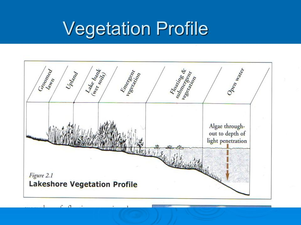 Vegetation Profile