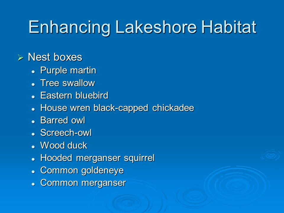 Enhancing Lakeshore Habitat  Nest boxes Purple martin Purple martin Tree swallow Tree swallow Eastern bluebird Eastern bluebird House wren black-capped chickadee House wren black-capped chickadee Barred owl Barred owl Screech-owl Screech-owl Wood duck Wood duck Hooded merganser squirrel Hooded merganser squirrel Common goldeneye Common goldeneye Common merganser Common merganser