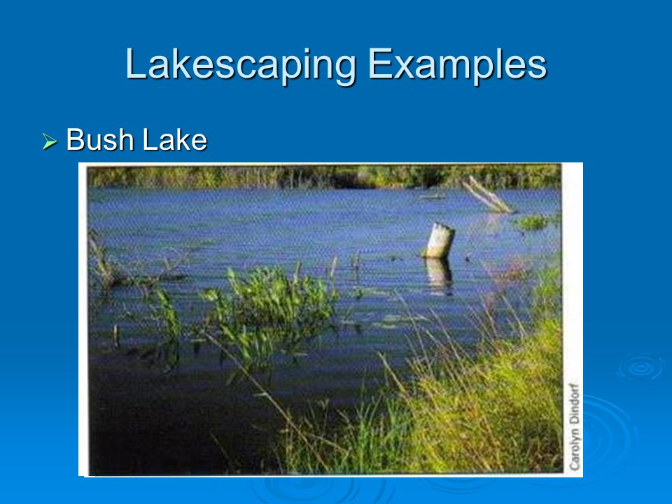 Lakescaping Examples  Bush Lake