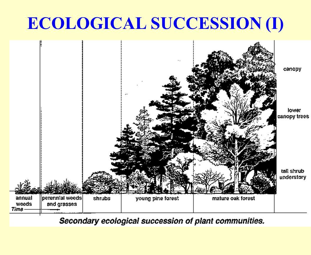 ECOLOGICAL SUCCESSION (II)