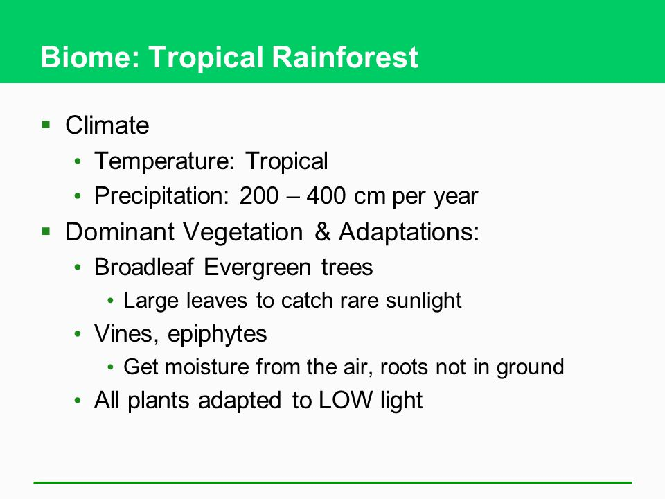 Biome: Tropical Rainforest  Climate Temperature: Tropical Precipitation: 200 – 400 cm per year  Dominant Vegetation & Adaptations: Broadleaf Evergreen trees Large leaves to catch rare sunlight Vines, epiphytes Get moisture from the air, roots not in ground All plants adapted to LOW light
