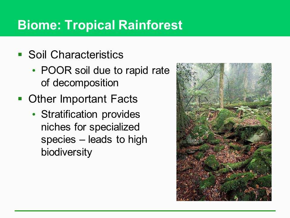 Biome: Tropical Rainforest  Soil Characteristics POOR soil due to rapid rate of decomposition  Other Important Facts Stratification provides niches for specialized species – leads to high biodiversity