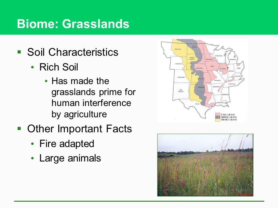 Biome: Grasslands  Soil Characteristics Rich Soil Has made the grasslands prime for human interference by agriculture  Other Important Facts Fire adapted Large animals