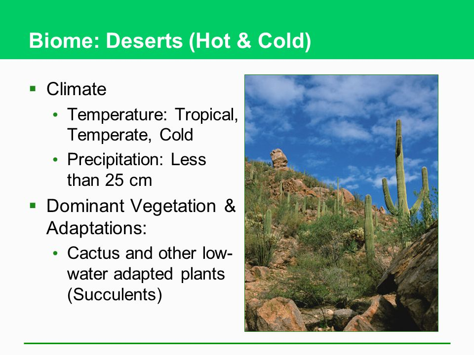 Biome: Deserts (Hot & Cold)  Climate Temperature: Tropical, Temperate, Cold Precipitation: Less than 25 cm  Dominant Vegetation & Adaptations: Cactus and other low- water adapted plants (Succulents)