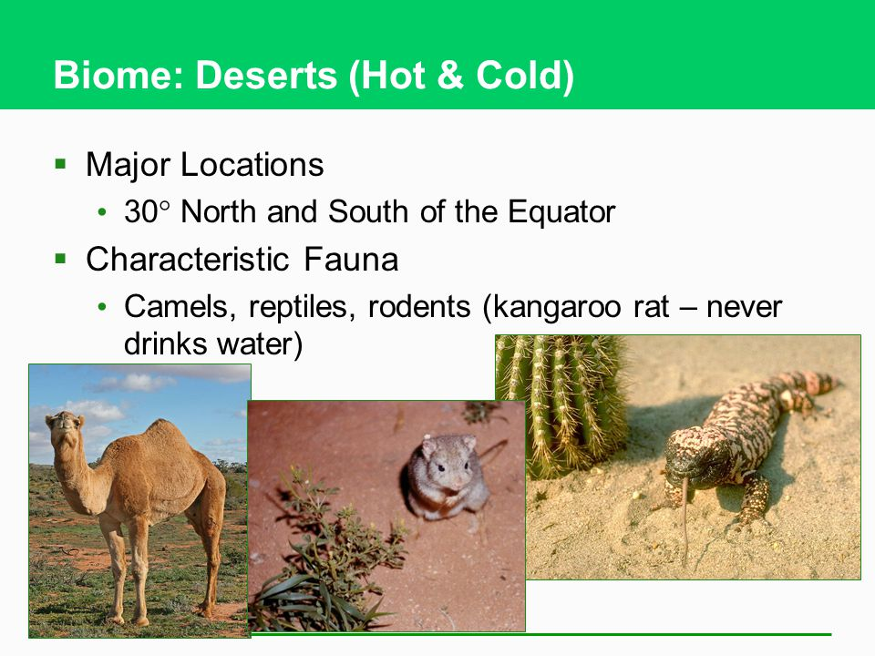 Biome: Deserts (Hot & Cold)  Major Locations 30  North and South of the Equator  Characteristic Fauna Camels, reptiles, rodents (kangaroo rat – never drinks water)