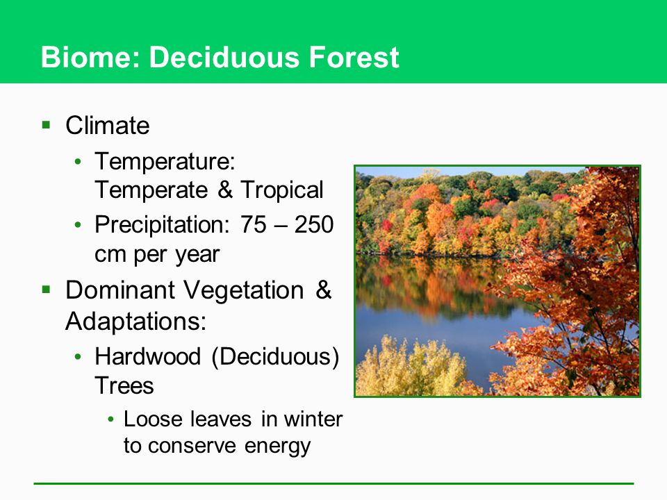 Biome: Deciduous Forest  Climate Temperature: Temperate & Tropical Precipitation: 75 – 250 cm per year  Dominant Vegetation & Adaptations: Hardwood (Deciduous) Trees Loose leaves in winter to conserve energy