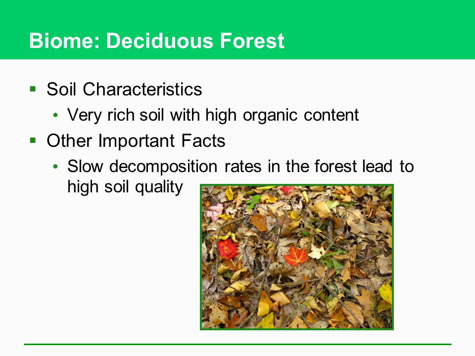 Biome: Deciduous Forest  Soil Characteristics Very rich soil with high organic content  Other Important Facts Slow decomposition rates in the forest lead to high soil quality