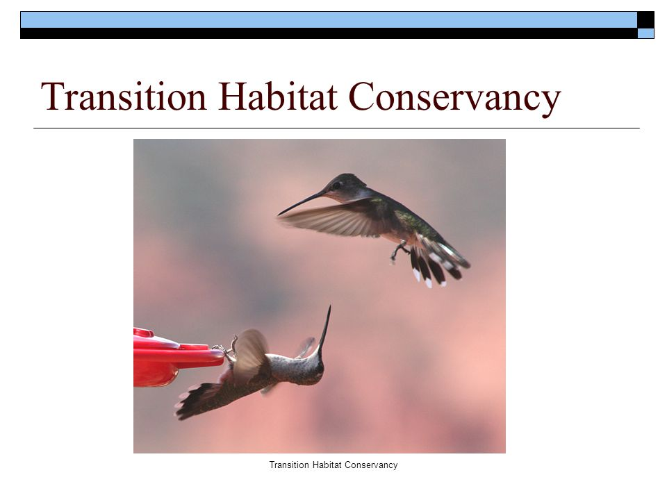  Mission :  Transition Habitat Conservancy is dedicated to preserving open space and natural wildlife habitat along the San Gabriel Mountain / Mojave Desert boundary for future generations