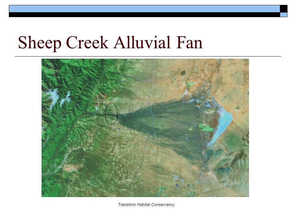 Transition Habitat Conservancy Sheep Creek Alluvial Fan