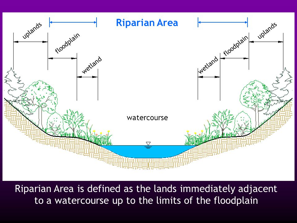 watercourse floodplain wetland floodplain uplands Riparian Area Riparian Area is defined as the lands immediately adjacent to a watercourse up to the limits of the floodplain