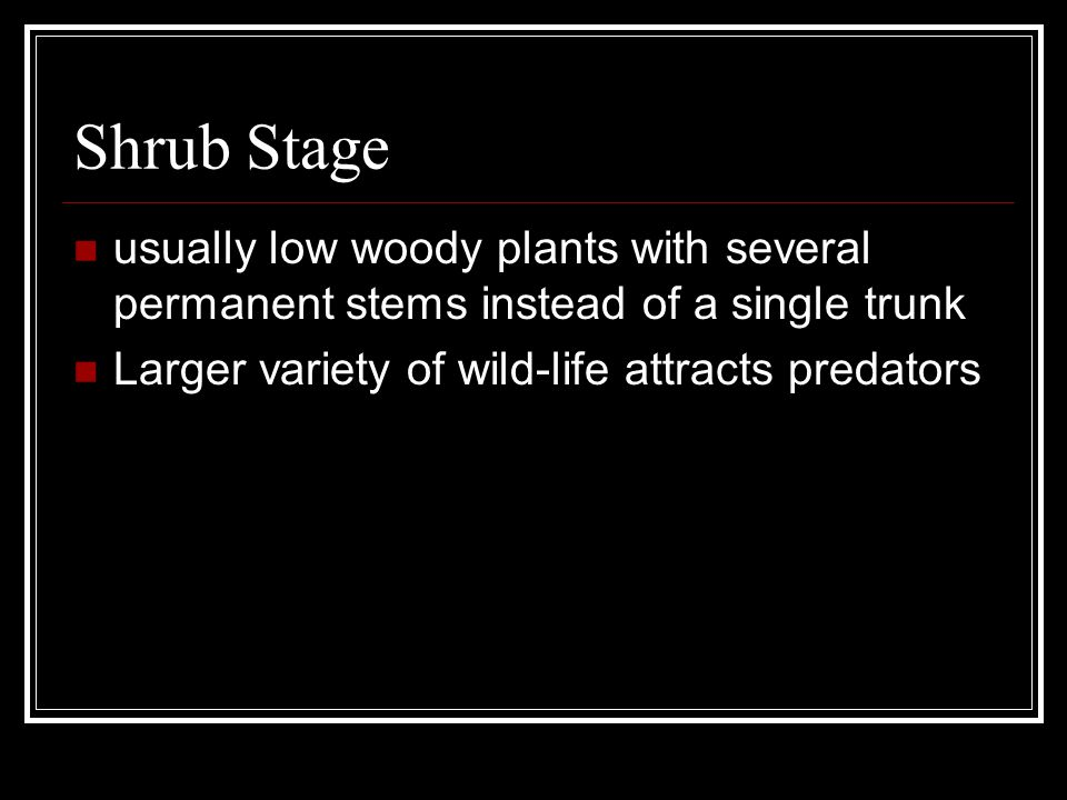 Young Forest Stage the quantity and diversity of shrubs and herbaceous plants decreases With less variety in food available, the number of wildlife species decreases.