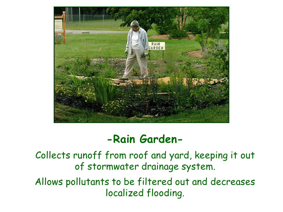 -Rain Garden- Collects runoff from roof and yard, keeping it out of stormwater drainage system.