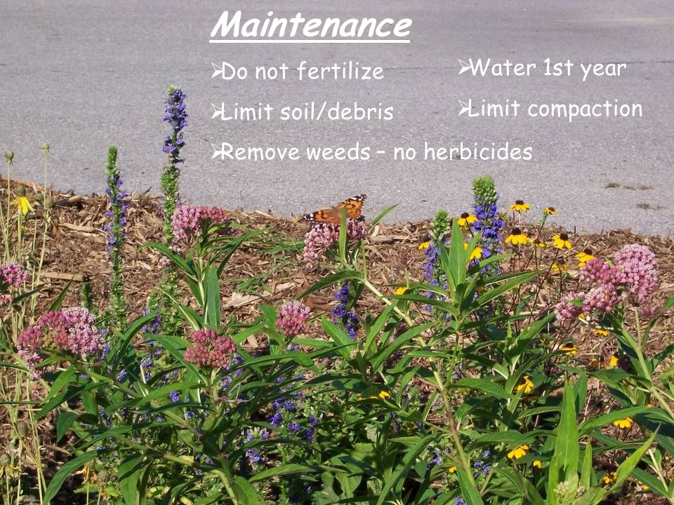 Maintenance  Do not fertilize  Limit soil/debris  Remove weeds – no herbicides  Water 1st year  Limit compaction