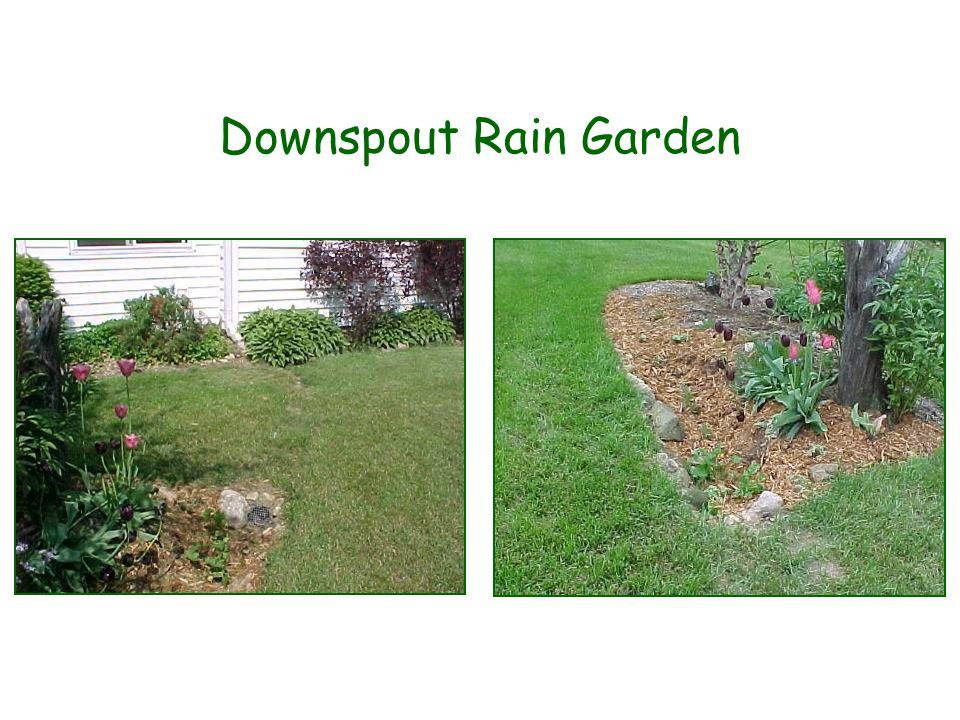 Downspout Rain Garden