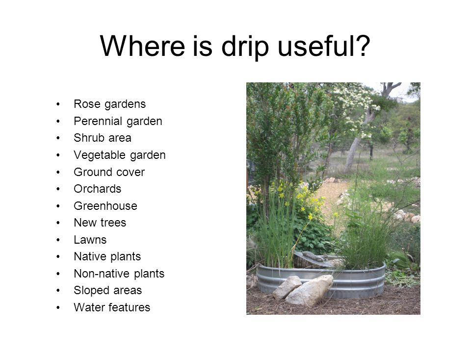 Where is drip useful? Rose gardens Perennial garden Shrub area Vegetable garden Ground cover Orchards Greenhouse New trees Lawns Native plants Non-nat