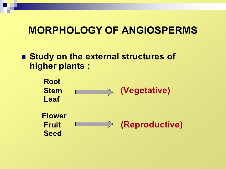 MORPHOLOGY OF ANGIOSPERMS Study on the external structures of higher plants : Root Stem (Vegetative) Leaf Flower Fruit (Reproductive) Seed