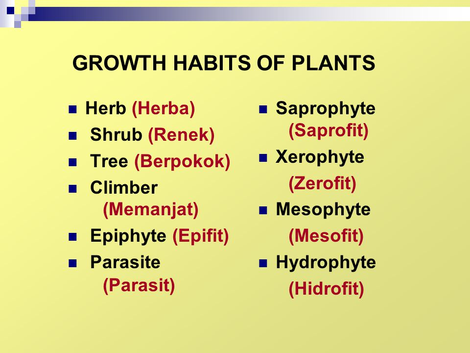 GROWTH HABITS OF PLANTS Herb (Herba) Shrub (Renek) Tree (Berpokok) Climber (Memanjat) Epiphyte (Epifit) Parasite (Parasit) Saprophyte (Saprofit) Xerop