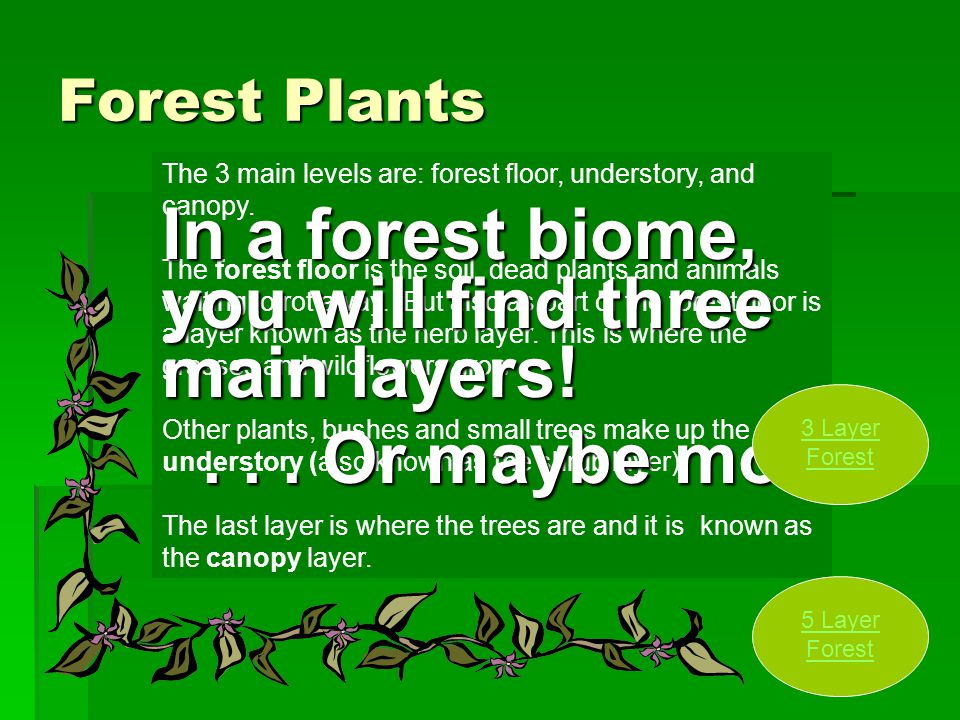 Forest Plants The 3 main levels are: forest floor, understory, and canopy. The forest floor is the soil, dead plants and animals waiting to rot away.