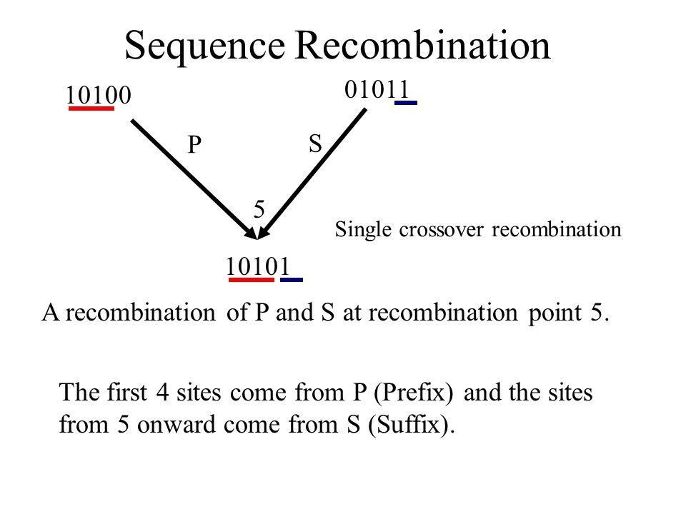 10100 01011 5 10101 The first 4 sites come from P (Prefix) and the sites from 5 onward come from S (Suffix). P S Sequence Recombination A recombinatio