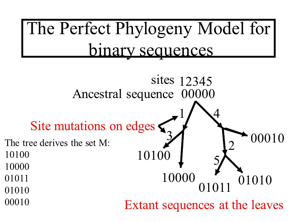 The converse problem Given a set of sequences M we want to find, if possible, a perfect phylogeny that derives M.