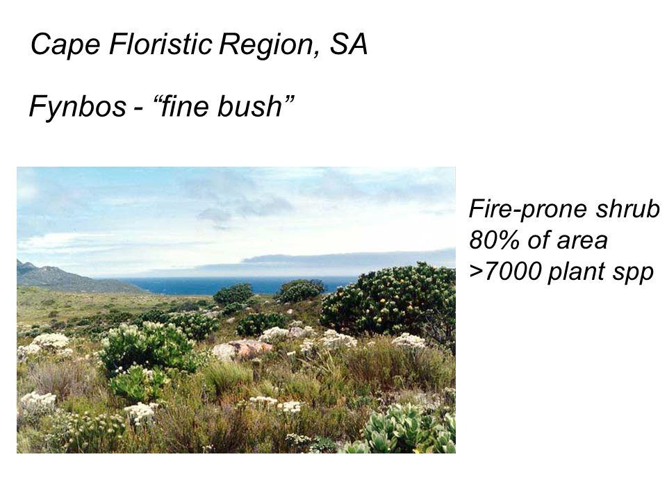 Cape Floristic Region, SA Fynbos - fine bush Fire-prone shrub 80% of area >7000 plant spp