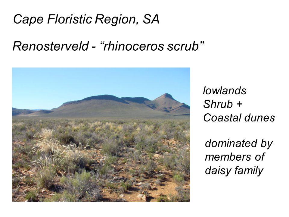 Cape Floristic Region, SA Renosterveld - rhinoceros scrub lowlands Shrub + Coastal dunes dominated by members of daisy family