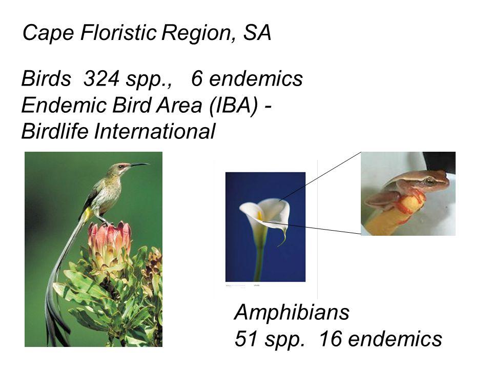Cape Floristic Region, SA Birds 324 spp., 6 endemics Endemic Bird Area (IBA) - Birdlife International Amphibians 51 spp.