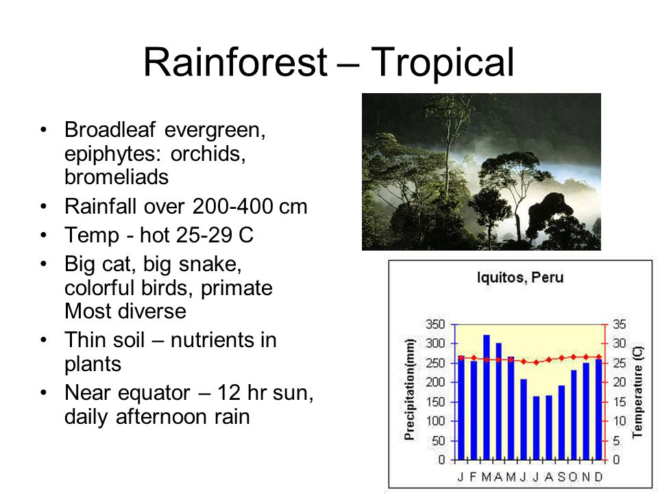 Rainforest – Tropical Broadleaf evergreen, epiphytes: orchids, bromeliads Rainfall over 200-400 cm Temp - hot 25-29 C Big cat, big snake, colorful birds, primate Most diverse Thin soil – nutrients in plants Near equator – 12 hr sun, daily afternoon rain