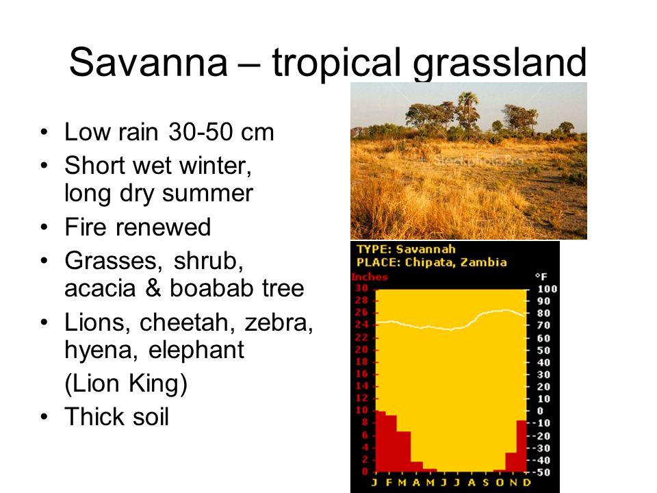 Savanna – tropical grassland Low rain 30-50 cm Short wet winter, long dry summer Fire renewed Grasses, shrub, acacia & boabab tree Lions, cheetah, zebra, hyena, elephant (Lion King) Thick soil