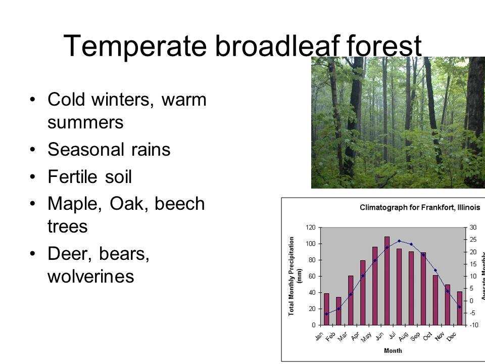 Temperate broadleaf forest Cold winters, warm summers Seasonal rains Fertile soil Maple, Oak, beech trees Deer, bears, wolverines