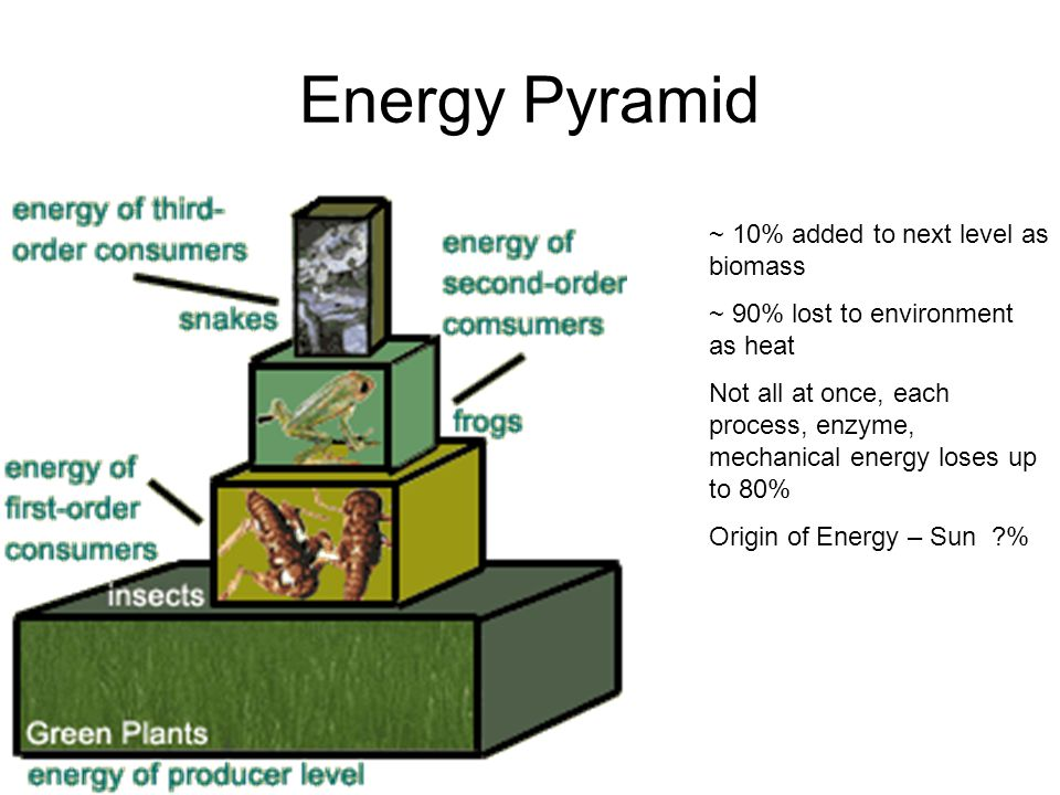 Energy Pyramid ~ 10% added to next level as biomass ~ 90% lost to environment as heat Not all at once, each process, enzyme, mechanical energy loses up to 80% Origin of Energy – Sun %