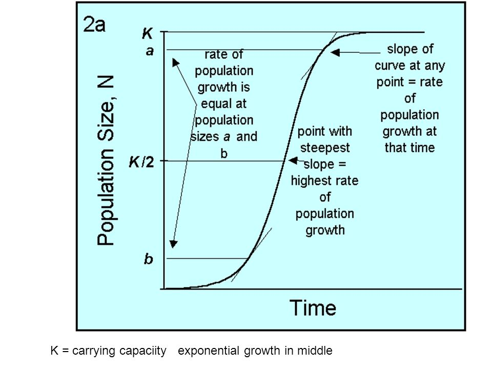 K = carrying capaciity exponential growth in middle
