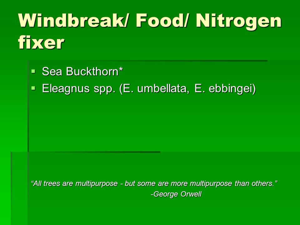 Windbreak/ Food/ Nitrogen fixer  Sea Buckthorn*  Eleagnus spp.