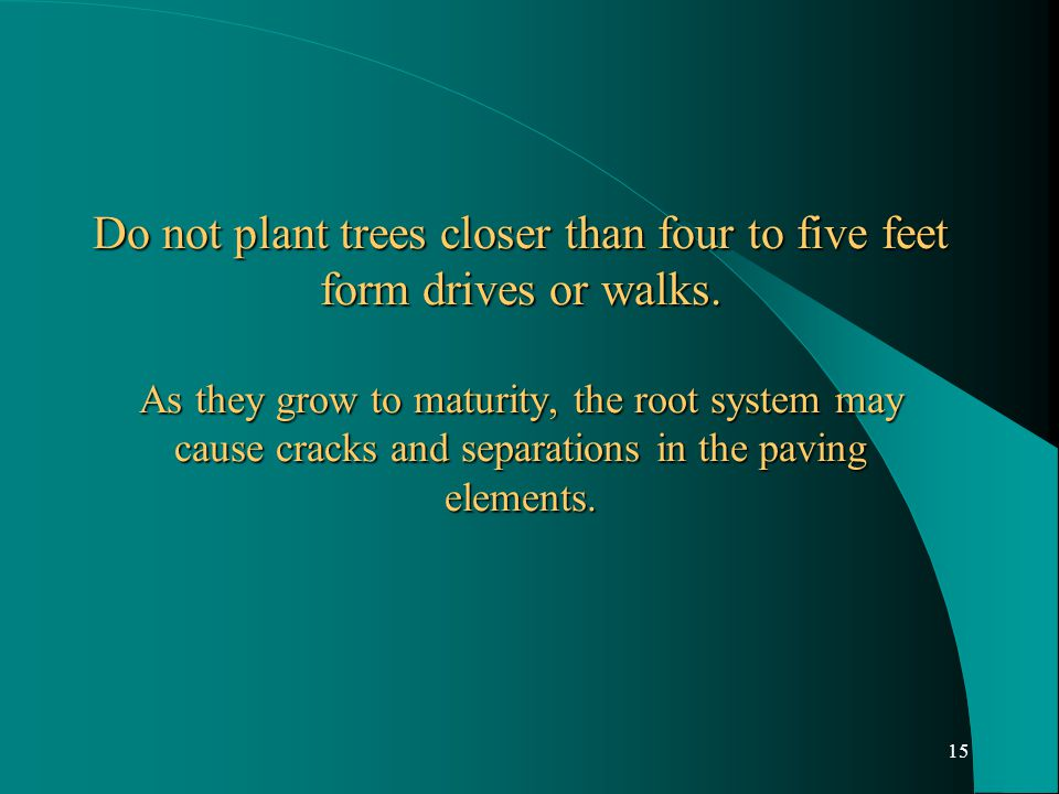 15 Do not plant trees closer than four to five feet form drives or walks.