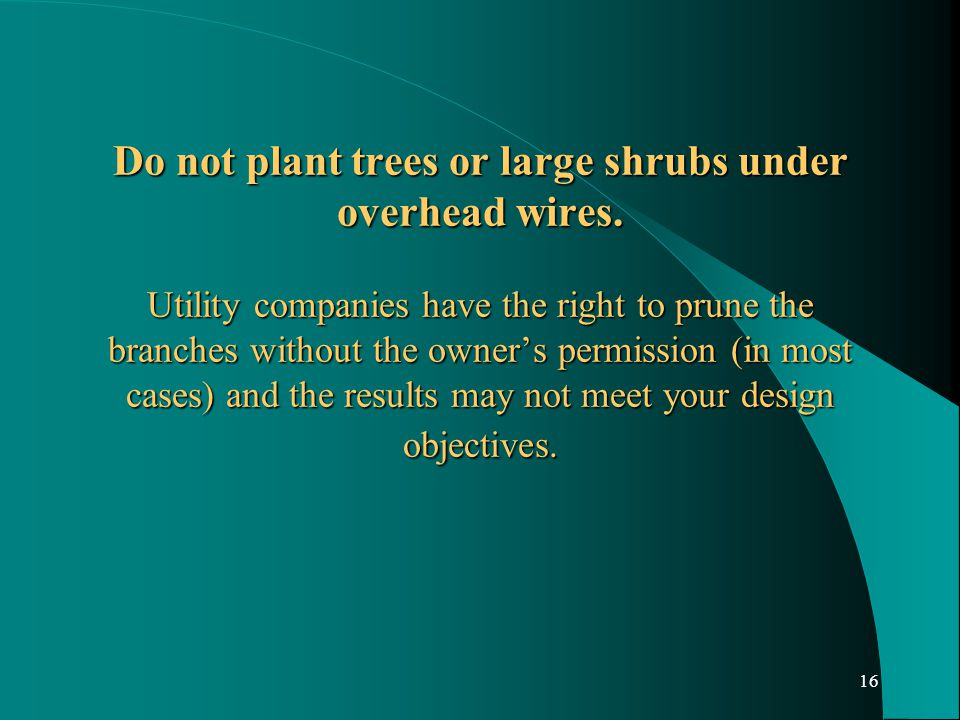 16 Do not plant trees or large shrubs under overhead wires.