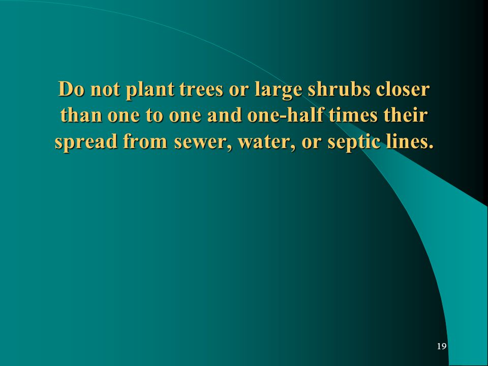 19 Do not plant trees or large shrubs closer than one to one and one-half times their spread from sewer, water, or septic lines.
