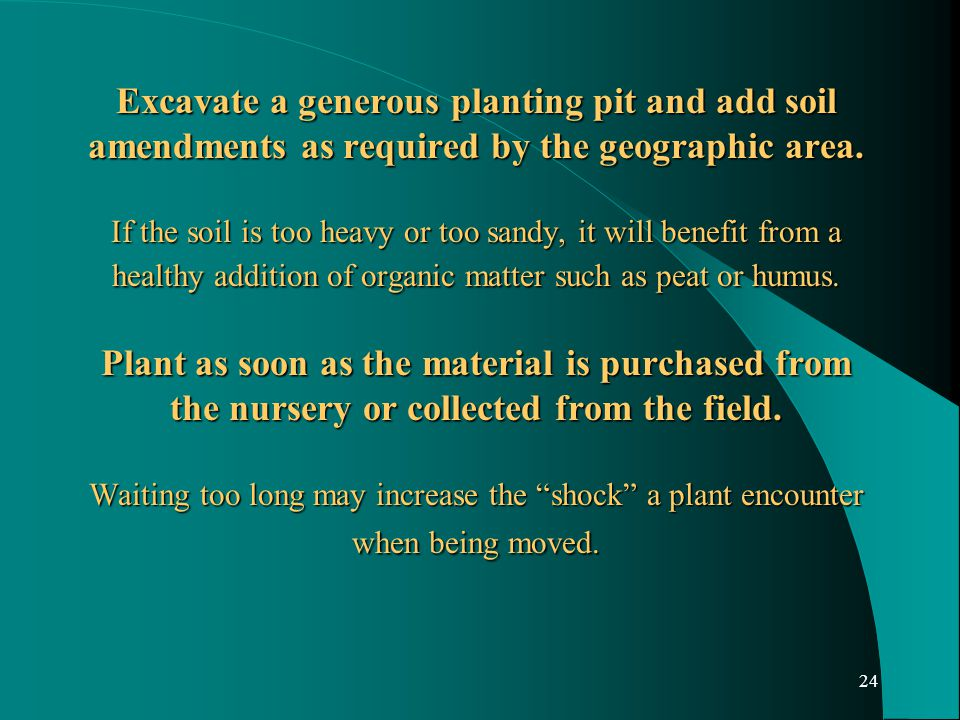 24 Excavate a generous planting pit and add soil amendments as required by the geographic area.