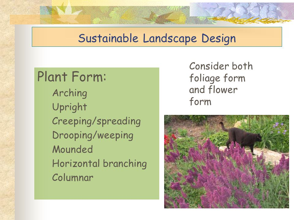 Plant Size (height and width) Consider the plant's MATURE, NATURAL size.