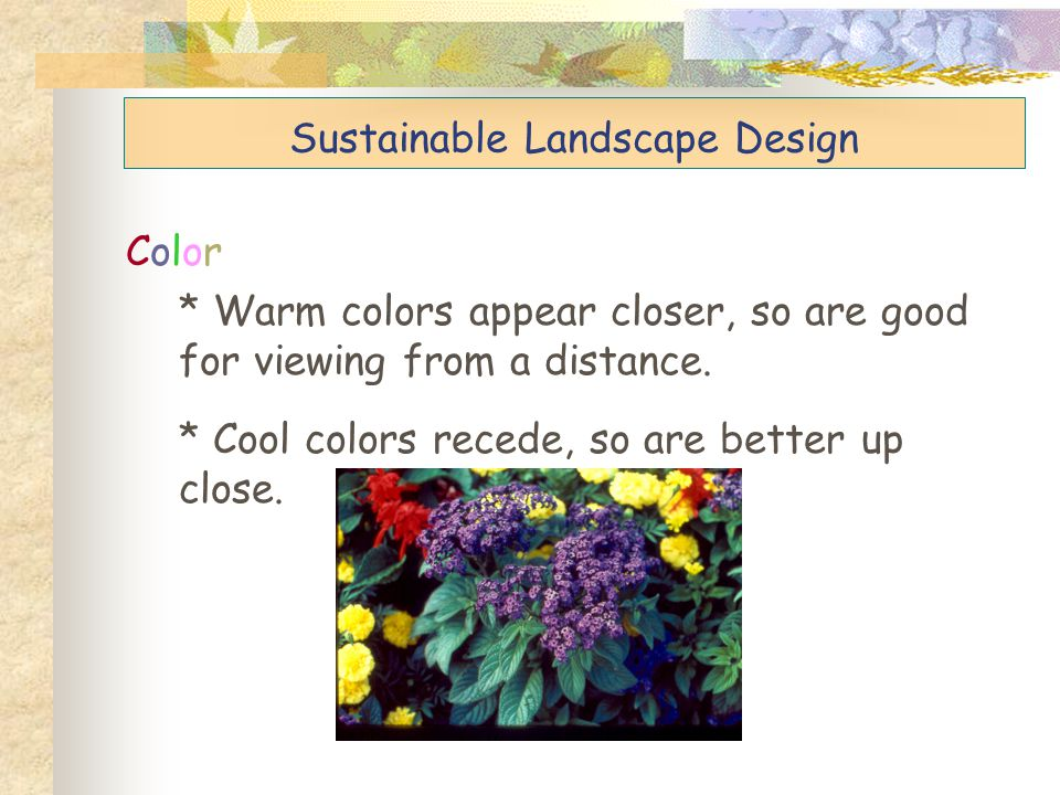 Sustainable Landscape Design Color * Warm colors appear closer, so are good for viewing from a distance. * Cool colors recede, so are better up close.
