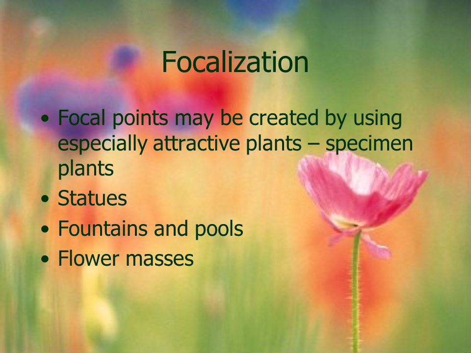 Focalization Focal points may be created by using especially attractive plants – specimen plants Statues Fountains and pools Flower masses