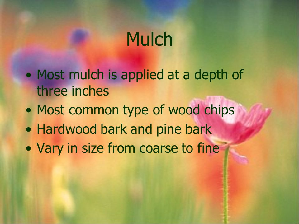 Mulch Most mulch is applied at a depth of three inches Most common type of wood chips Hardwood bark and pine bark Vary in size from coarse to fine