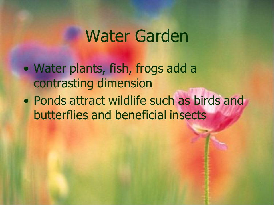 Water Garden Water plants, fish, frogs add a contrasting dimension Ponds attract wildlife such as birds and butterflies and beneficial insects