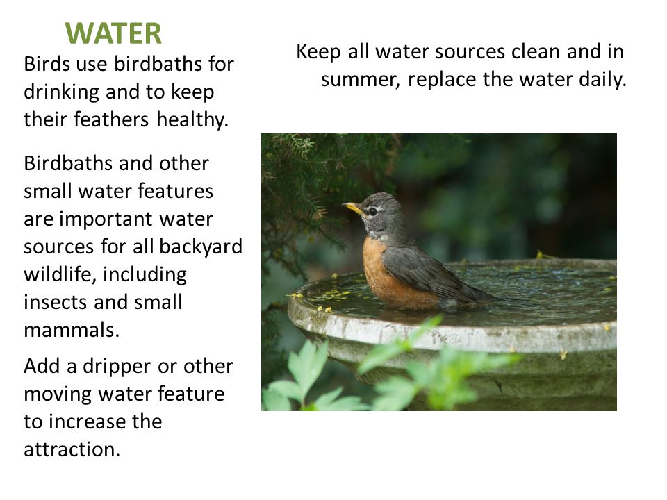 WATER Birds use birdbaths for drinking and to keep their feathers healthy. Birdbaths and other small water features are important water sources for al