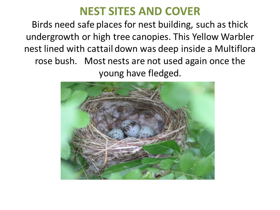 NEST SITES AND COVER Birds need safe places for nest building, such as thick undergrowth or high tree canopies.