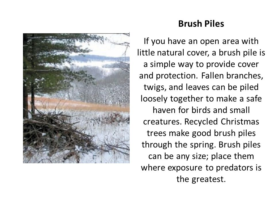 Brush Piles If you have an open area with little natural cover, a brush pile is a simple way to provide cover and protection. Fallen branches, twigs,